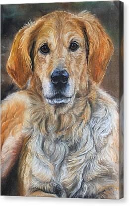 Lola Golden Retriever Pet Portrait Canvas Print by Rebecca Davis