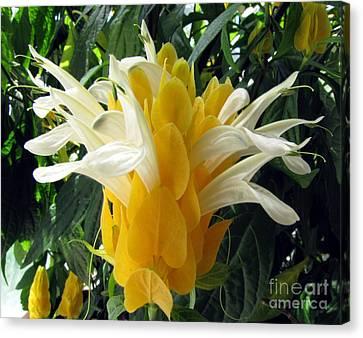 Lolliepop Plant Canvas Print