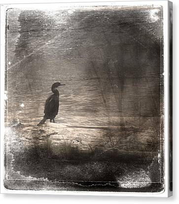 Lone Cormorant Canvas Print by Carol Leigh