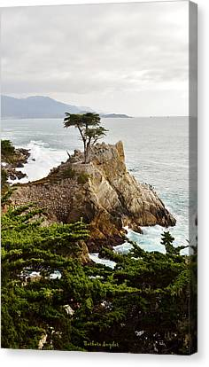 Lone Cypress 17 Mile Drive Monetery Canvas Print by Barbara Snyder