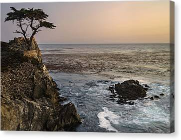 Canvas Print featuring the photograph Big Sur - Lone Cypress by Francesco Emanuele Carucci