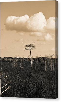 Canvas Print featuring the photograph lone cypress III by Gary Dean Mercer Clark