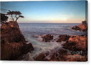Tranquil Canvas Print - Lone Cyprus Pebble Beach by Mike Reid