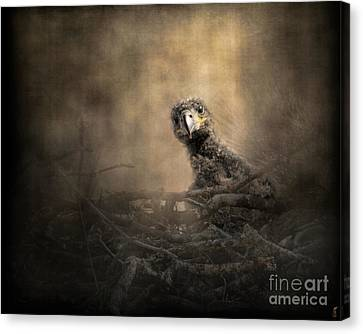 Lone Eaglet In The Nest Canvas Print by Jai Johnson