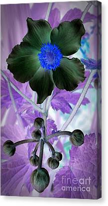 Lone Flower 1 Canvas Print by Chalet Roome-Rigdon