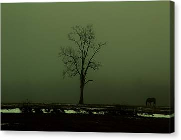 Lone Horse Canvas Print by Andrea Galiffi