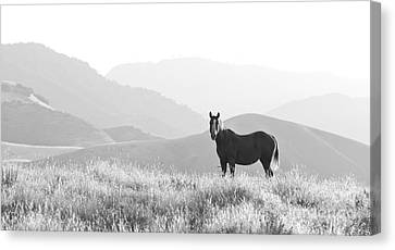 Lone Horse Canvas Print by B Christopher