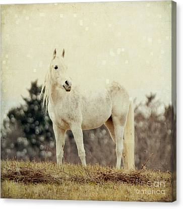 Lone Horse Canvas Print by Diane Miller