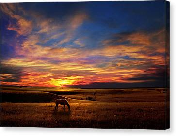 Lone Horse Greenwood County Canvas Print by Rod Seel