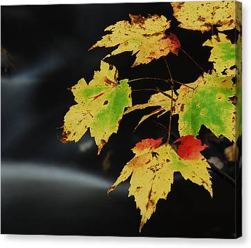 Lone Leaves Over Water Canvas Print