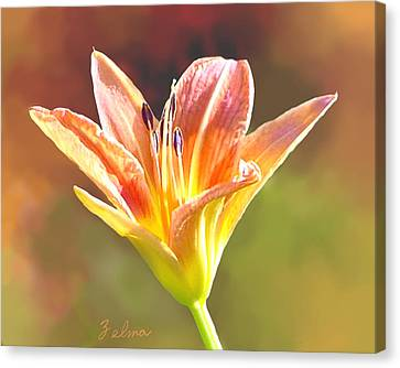 Lone Lilly Canvas Print