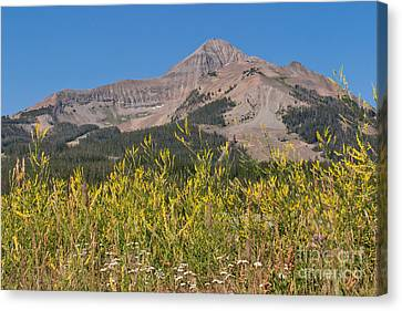 Lone Mountain And Wildflowers Canvas Print by Charles Kozierok