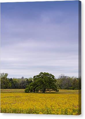 Lone Oak In A Field Of Phlox - Industry Texas Canvas Print by Silvio Ligutti