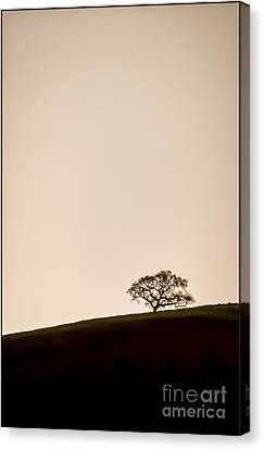 Lone Oak Tree Canvas Print by Holly Martin