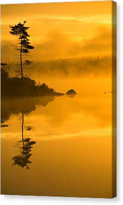 Lone Pine And Misty Lake At Dawn Canvas Print by Irwin Barrett