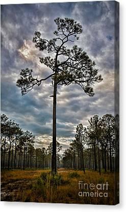 Lone Pine Canvas Print by Henry Kowalski