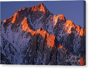 Lone Pine Peak - February Canvas Print by Inge Johnsson