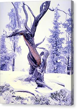 Lone Pine Canvas Print by Ray Mathis