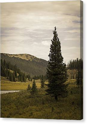 Lone Pine Canvas Print by Wayne Meyer