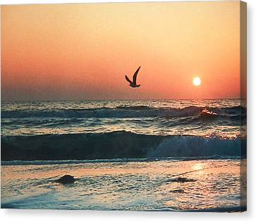 Lone Seagull Sunset Flight Canvas Print by Belinda Lee