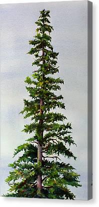 Lone Spruce Canvas Print by Karen Mattson
