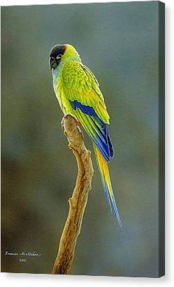 Lone Star - Nanday Conure Canvas Print by Frances McMahon