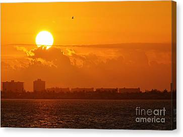 Lone Tern At Sunrise Canvas Print