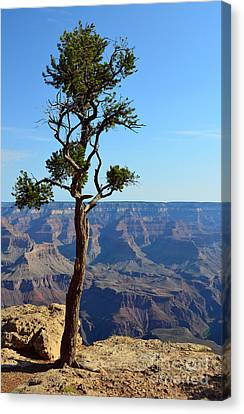 Lone Tree At The Edge Of The Grand Canyon Vertical Canvas Print