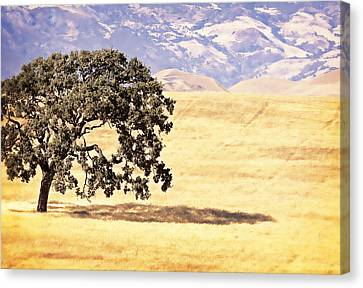 Lone Tree Canvas Print by Caitlyn  Grasso