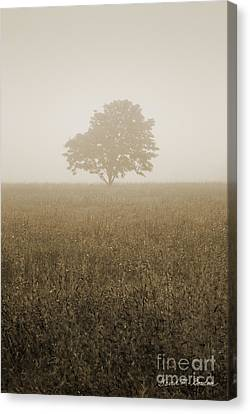 Lone Tree In Meadow Canvas Print by David Gordon
