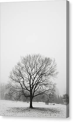 Canvas Print featuring the photograph Lone Tree In Snow by Ed Cilley