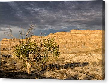 San Rafael Swell Canvas Print - Lone Tree In The Desert by Kathleen Bishop
