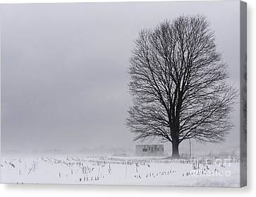 Lone Tree In The Fog Canvas Print