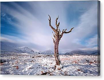 Lone Tree In The Snow Canvas Print by Grant Glendinning