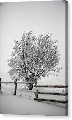 Lone Tree Canvas Print by John Haldane