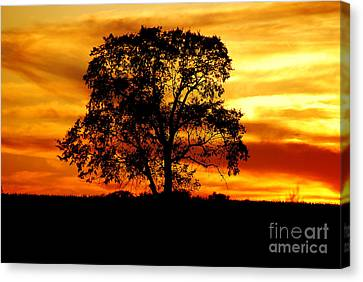 Canvas Print featuring the photograph Lone Tree by Mary Carol Story