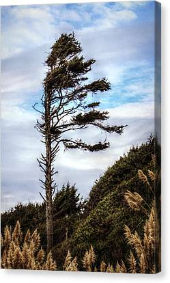 Lone Tree Canvas Print by Melanie Lankford Photography