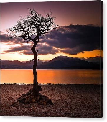 Lone Tree Of Loch Lomond Canvas Print