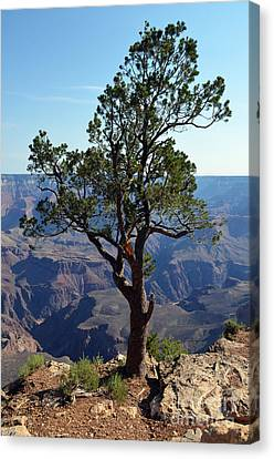 Grand Canyon Canvas Print - Lone Tree On The Edge Of The Grand Canyon Vertical by Shawn O'Brien