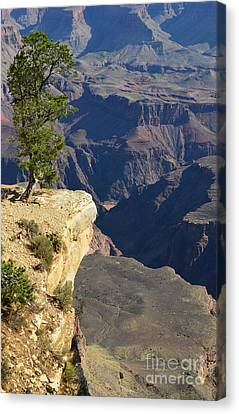 Lone Tree Overlooking Grand Canyon National Park Vertical Canvas Print by Shawn O'Brien