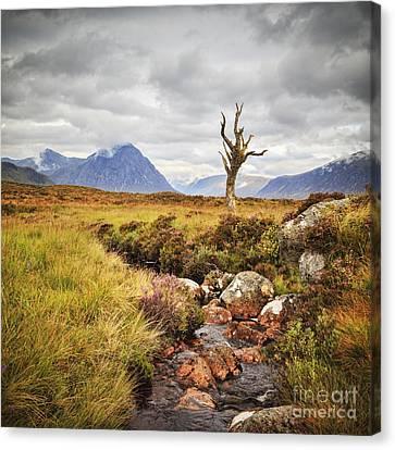 Lone Tree Rannoch Moor Scotland Canvas Print by Colin and Linda McKie