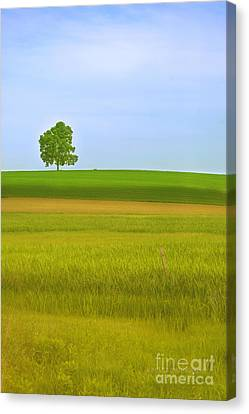 Lone Tree Canvas Print by Rima Biswas
