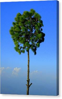 Lone Tree Canvas Print by Salman Ravish