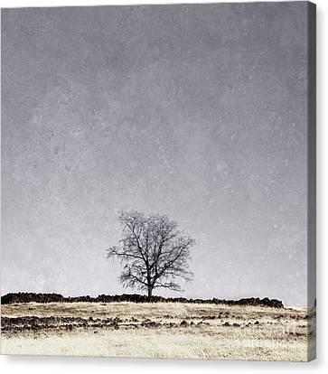 Canvas Print - Lone Tree by Sheri Van Wert