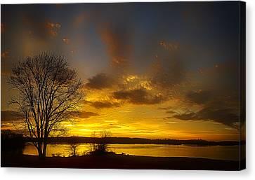 Lone Tree Sunrise Canvas Print by Dan Holland