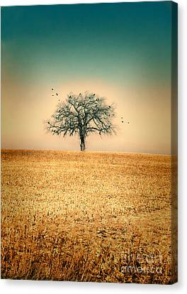 Lone Tree With Birds Canvas Print