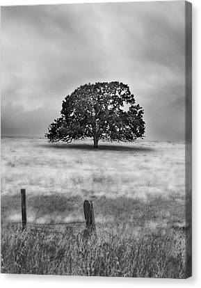 Lone Valley Oak Vertical Canvas Print