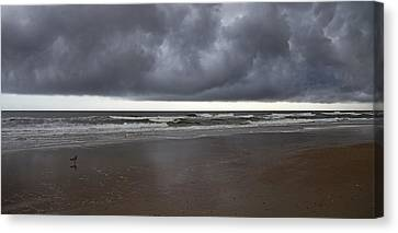 Lone Watcher  Canvas Print by Betsy Knapp