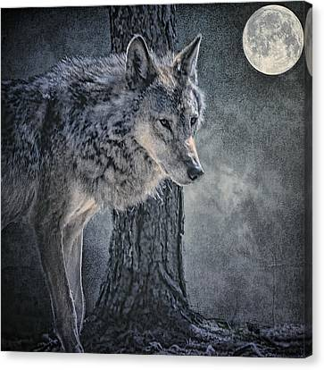 Canvas Print featuring the photograph Lone Wolf by Brian Tarr