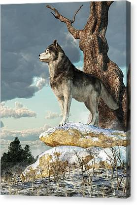 Daniel Canvas Print - Lone Wolf by Daniel Eskridge